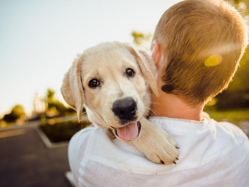 Learning About Becoming a New Pet Owner